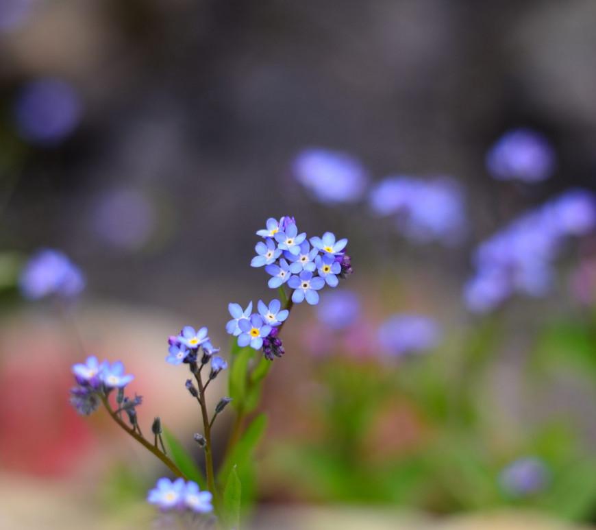 Dementia Friendly Garden Wildflower