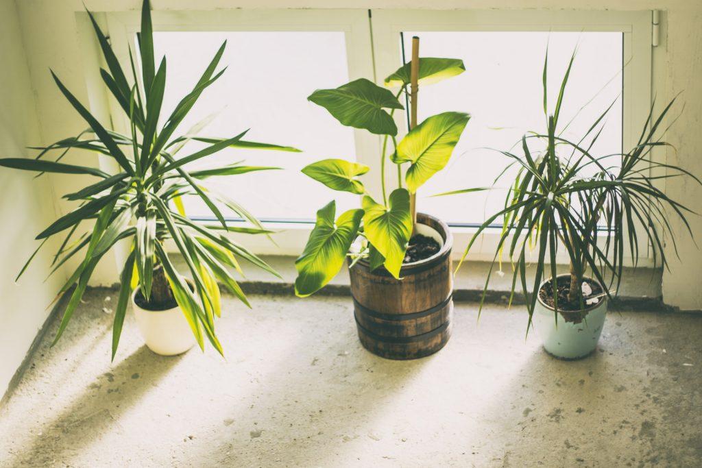 Houseplants in the bedroom