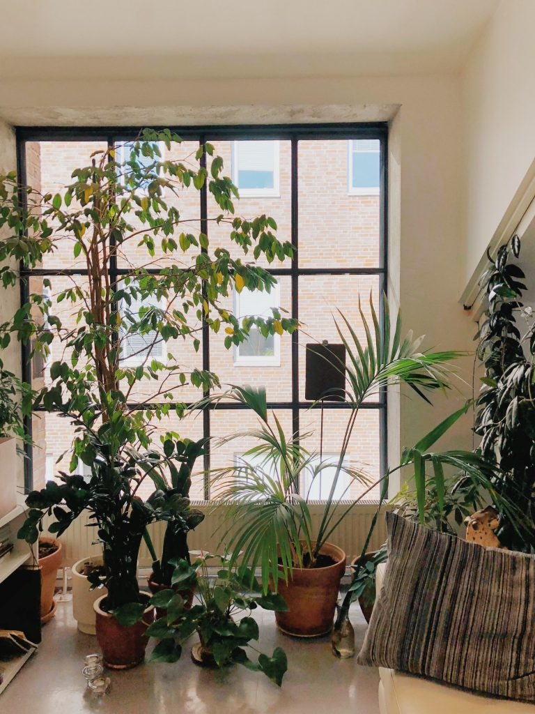 Houseplants on a windowsill